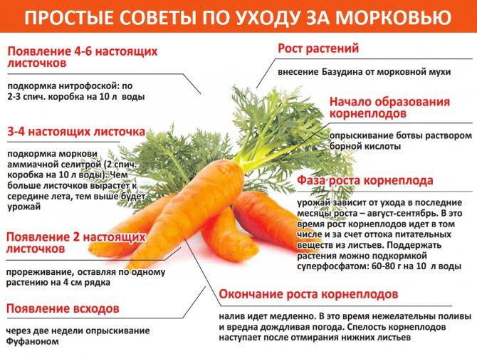 Проращивание картофеля перед посадкой: сроки и способы проведения процедуры
