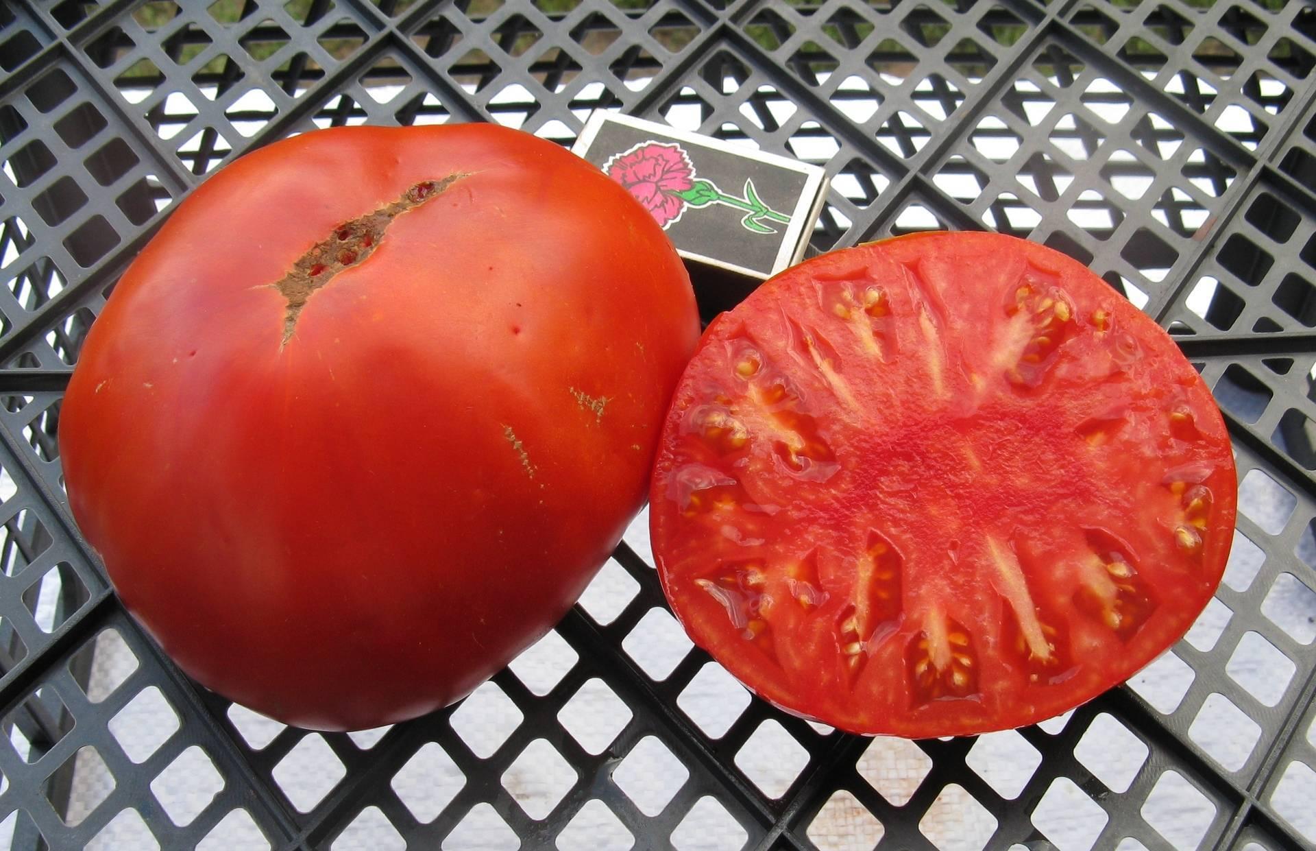 """Томат """"король гигантов"""": как получить богатый урожай"""