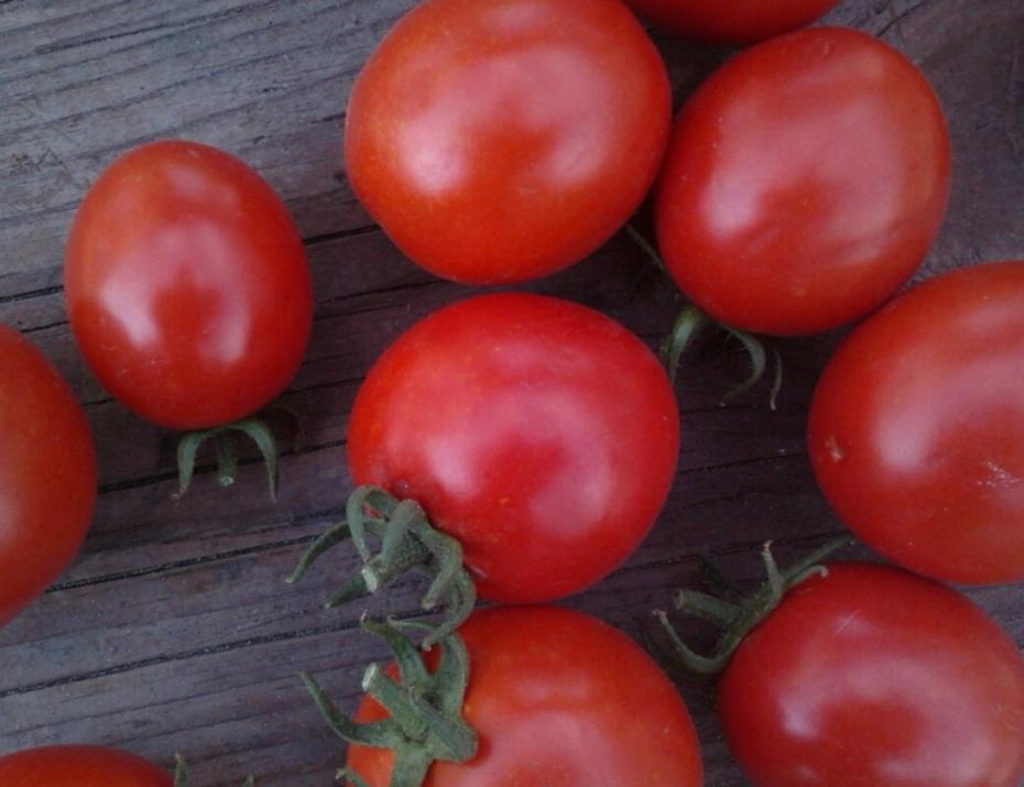 Описание томата Асвон и его характеристики, урожайность