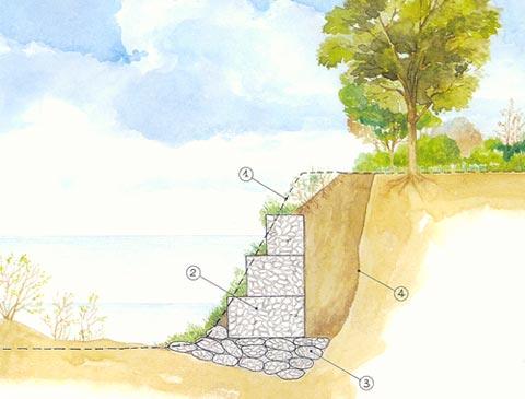 Деревья удерживающие грунт. растения для укрепления склона