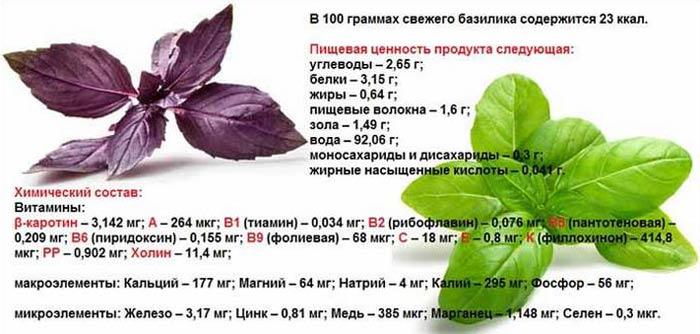 Базилик полезные свойства и противопоказания для женщин и мужчин, польза и вред для здоровья