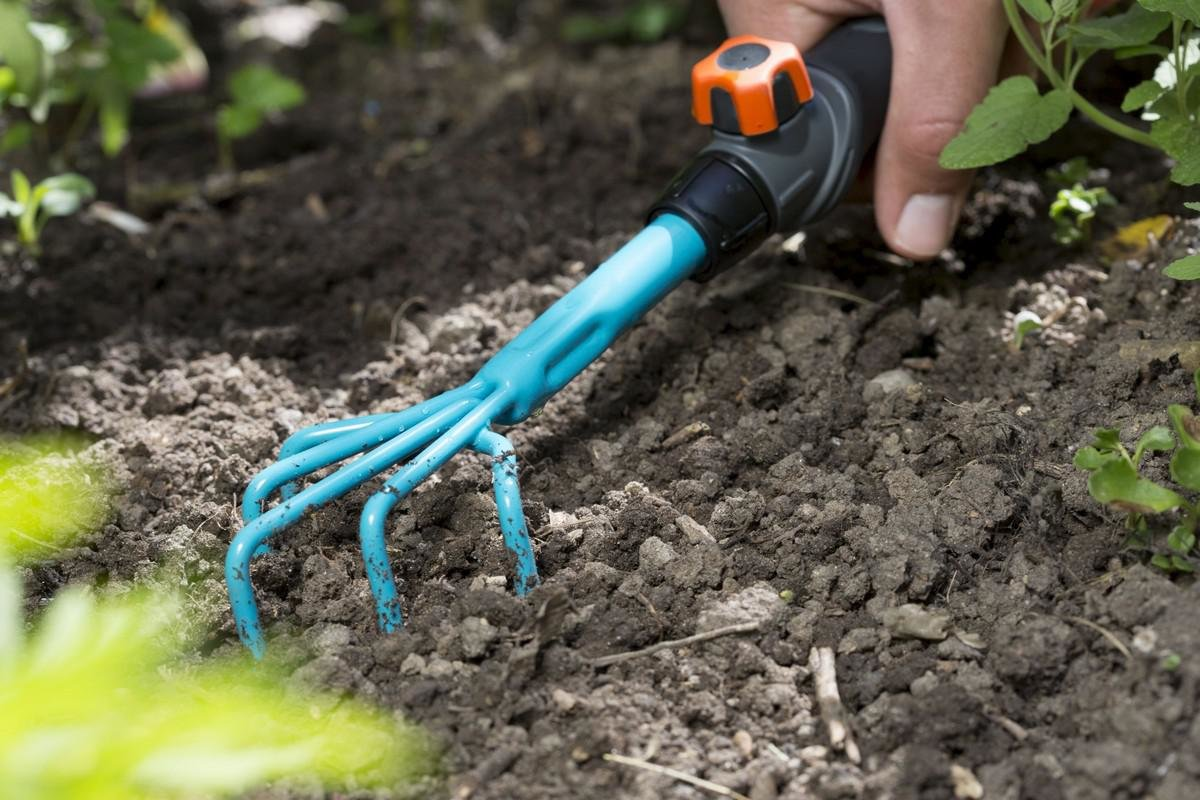 Кивано: выращивание из семян в домашних условиях