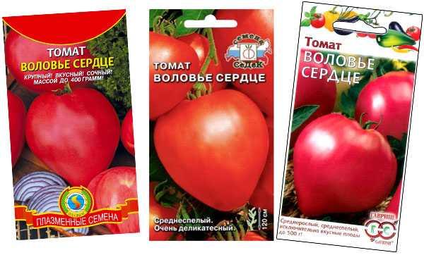 Лучший эксперимент российских селекционеров — томат «воловье сердце»: характеристика и описание сорта, фото