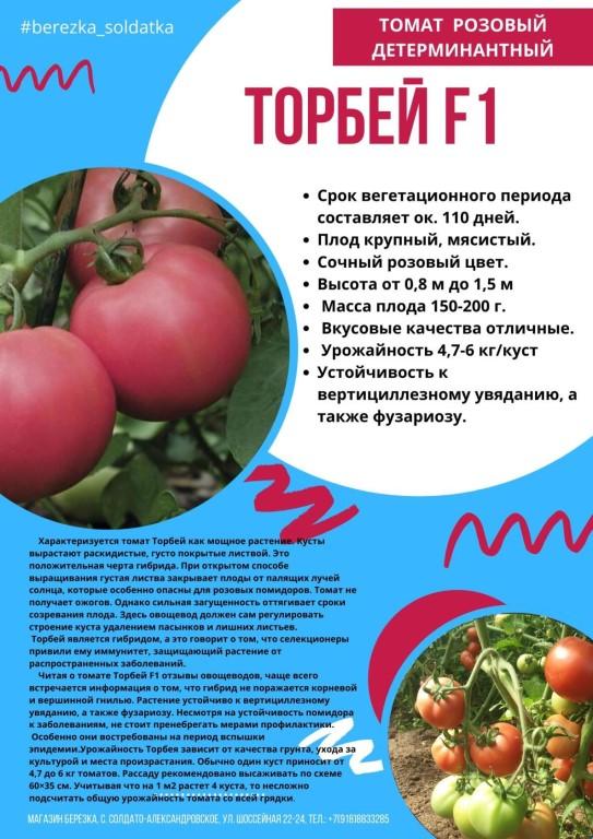 Среднеранний гибрид — томат «мажор» f1. всё о выращивании, а также описание сорта и характеристика