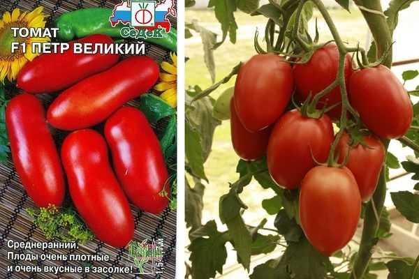 Томат петр 1: отзывы, фото, урожайность, описание и характеристика | tomatland.ru