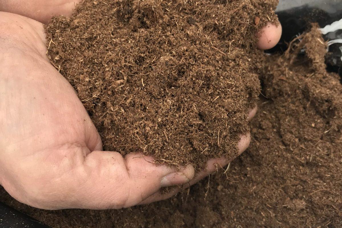 Торф как удобрение: для каких растений лучше подходит верховой и низинный? польза и вред для огорода и для цветов