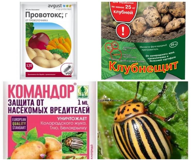 «корадо», препарат для борьбы с колорадским жуком и тлей -- инструкция по применению, где купить дешевле
