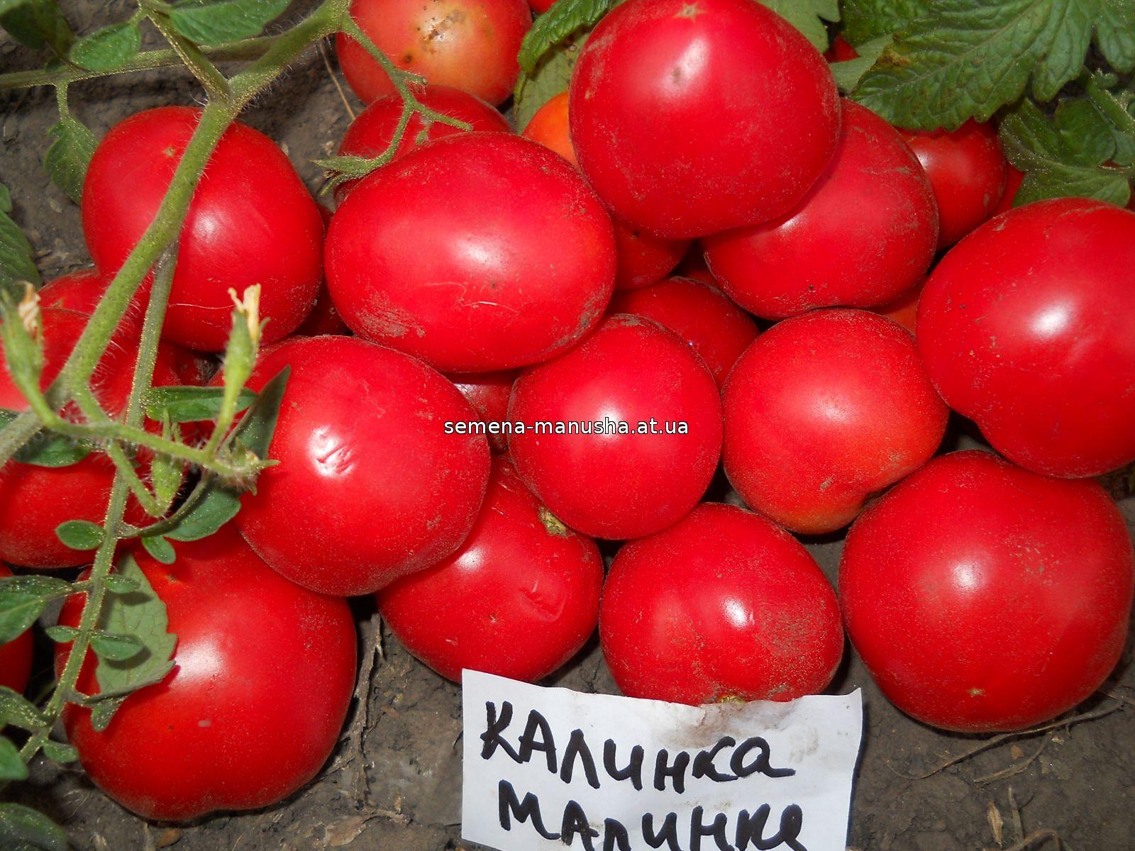Томат малинка стар f1: описание сорта, отзывы, фото, урожайность