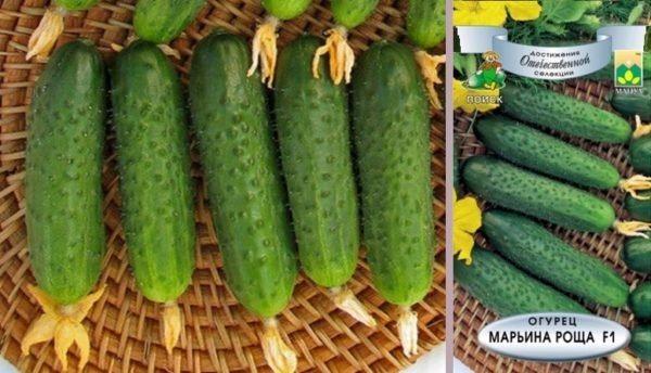 Сорт огурцов маринда f1: описание гибрида корнишонов, отзывы, фото и показатели урожайности, выращивание, посадка и уход