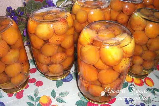 Абрикосовый компот — вкусный и полезный напиток, рецепты на зиму в банках