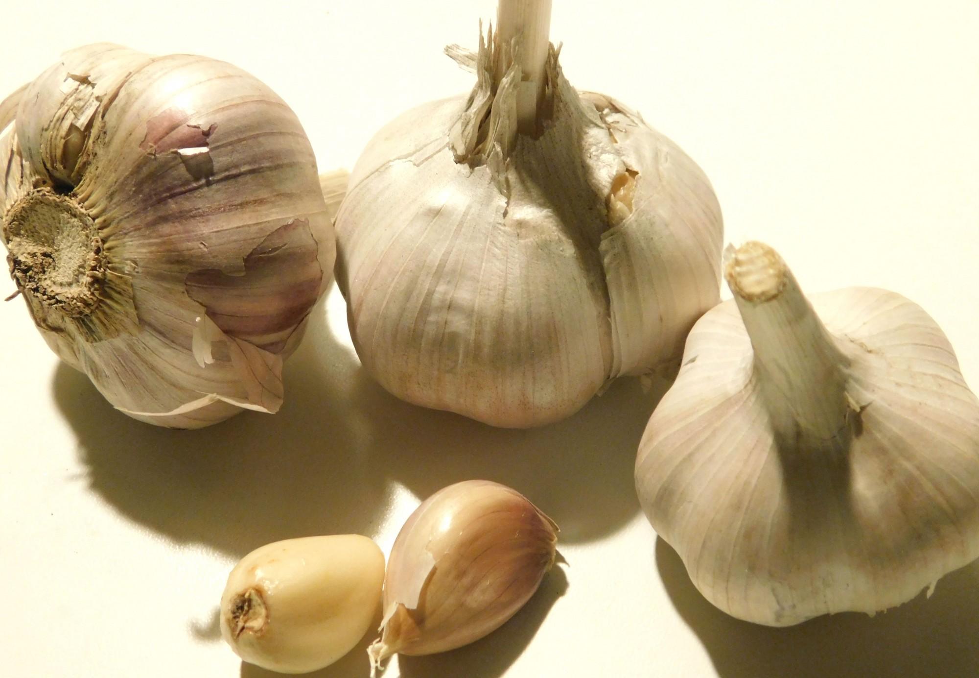 Описание чеснока Подмосковный, выращивание сорта и сбор урожая