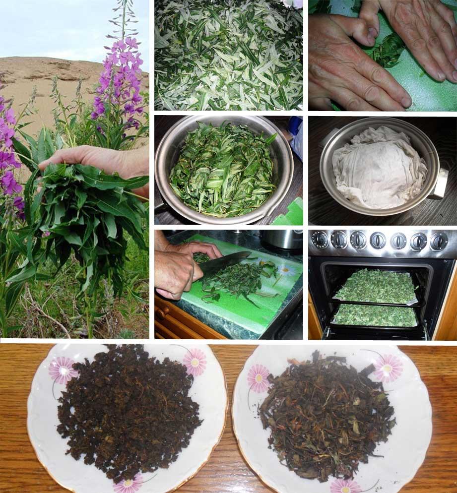 Когда собирать и как сушить крапиву в домашних условиях: особенности заготовки крапивы на зиму