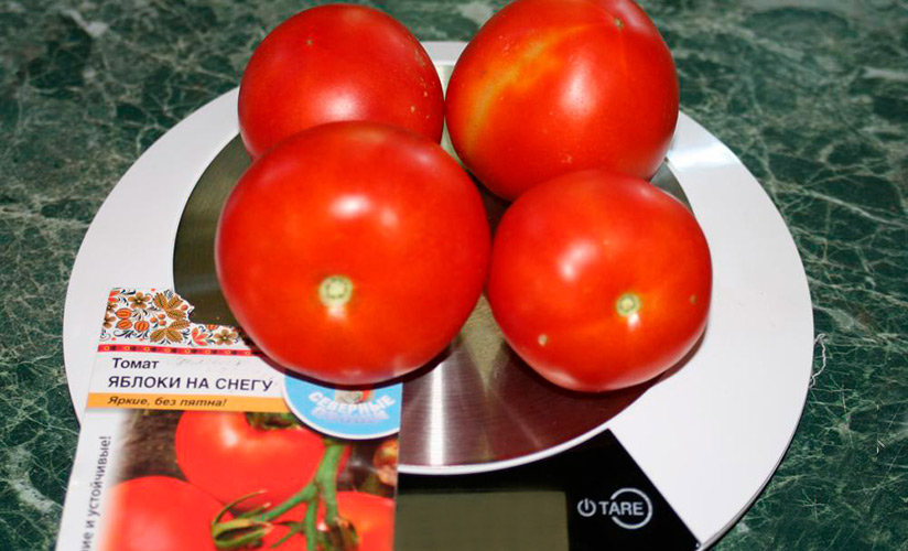 ✅ все о томате яблочном: агротехника, характеристики и описание сорта - tehnomir32.ru