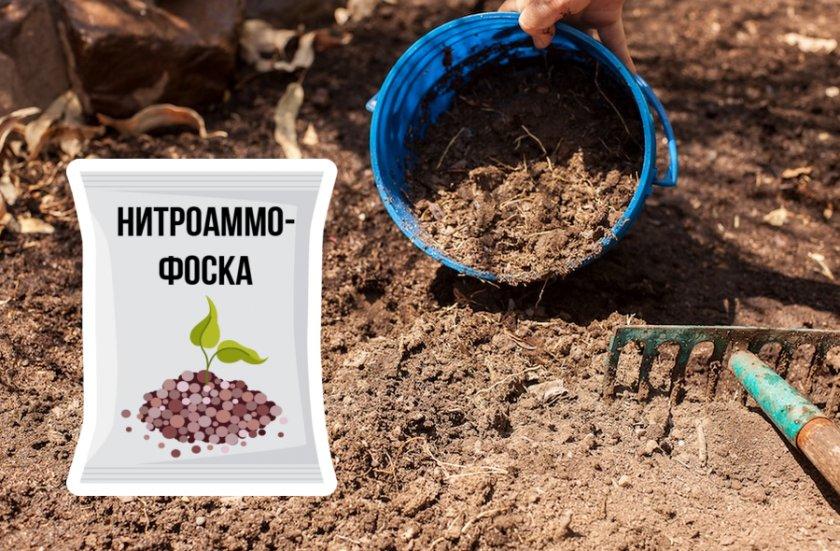 Чем подкормить голубику садовую осенью для увеличения урожая