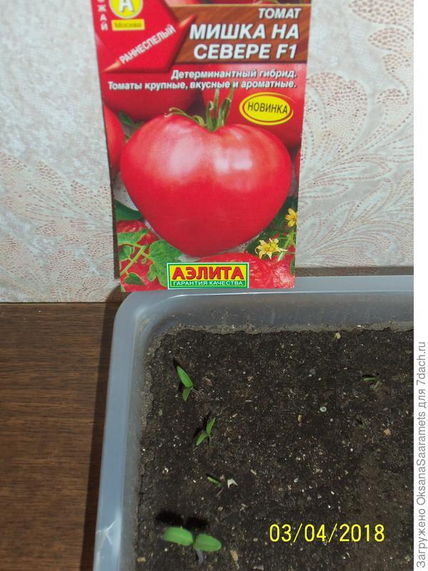 """Томат """"машенька"""": описание и характеристики сорта, рекомендации по уходу и выращиванию этих неприхотливых помидор, фото пловод русский фермер"""