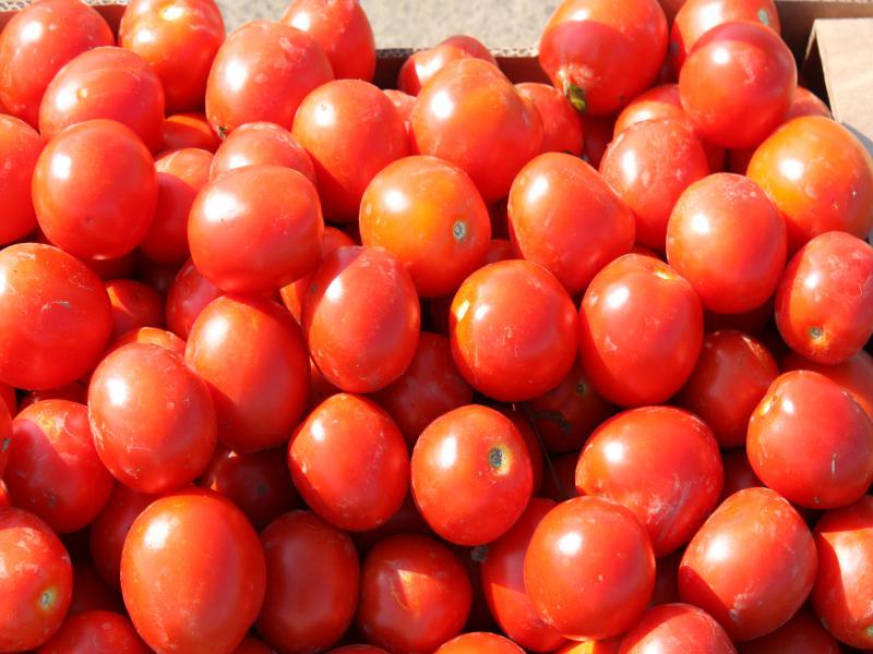 Солероссо f1 – идеальный ранний сорт томатов