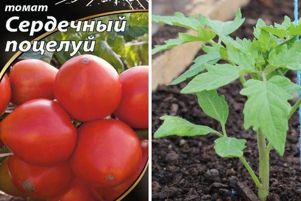 Томат сердечный поцелуй: характеристика и описание сорта, урожайность с фото