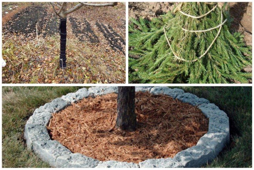 Подготовка яблони к зиме на урале – полное руководство