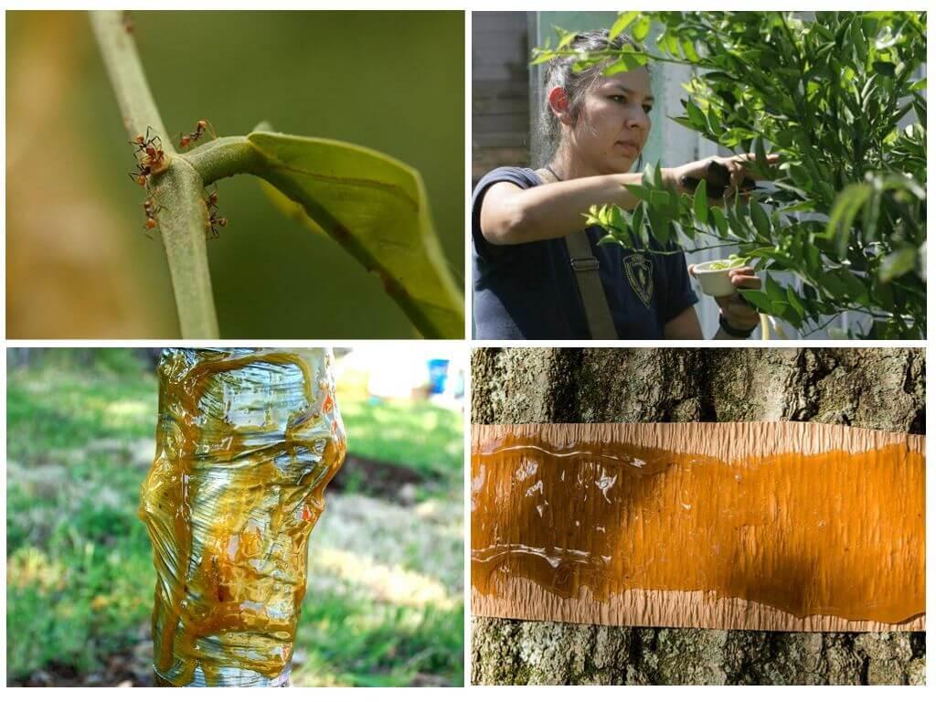 Как бороться с тлей на плодовых деревьях народными и другими средствами