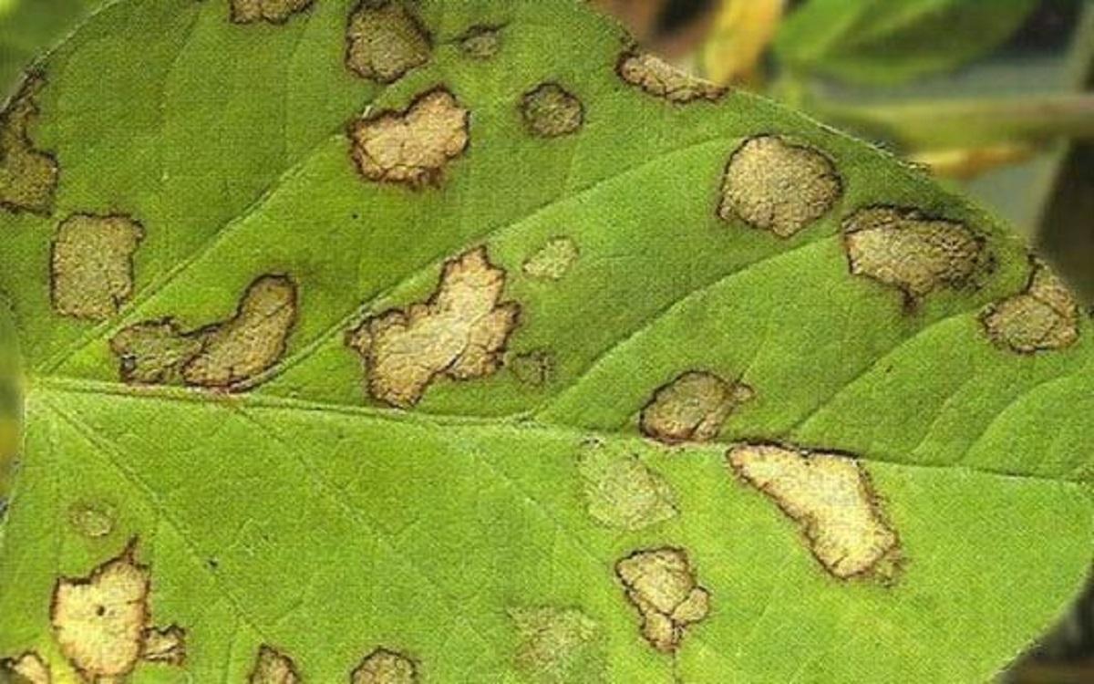 Болезни и вредители многолетних растений