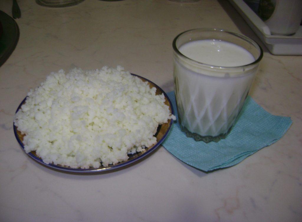 Полезные свойства молочного гриба и его противопоказания (+17 фото)
