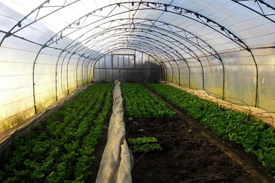 Выращивание овощей в теплице зимой: как оборудовать теплицу и собирать урожай круглый год? русский фермер
