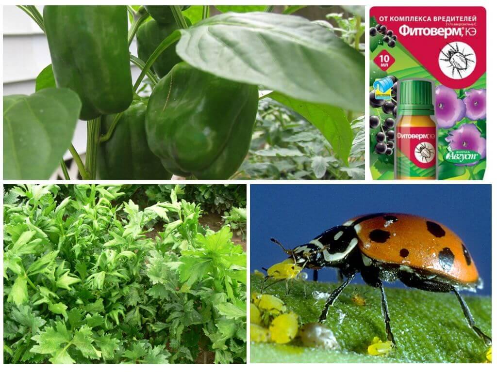Болезни и вредители растений: эффективные методы борьбы