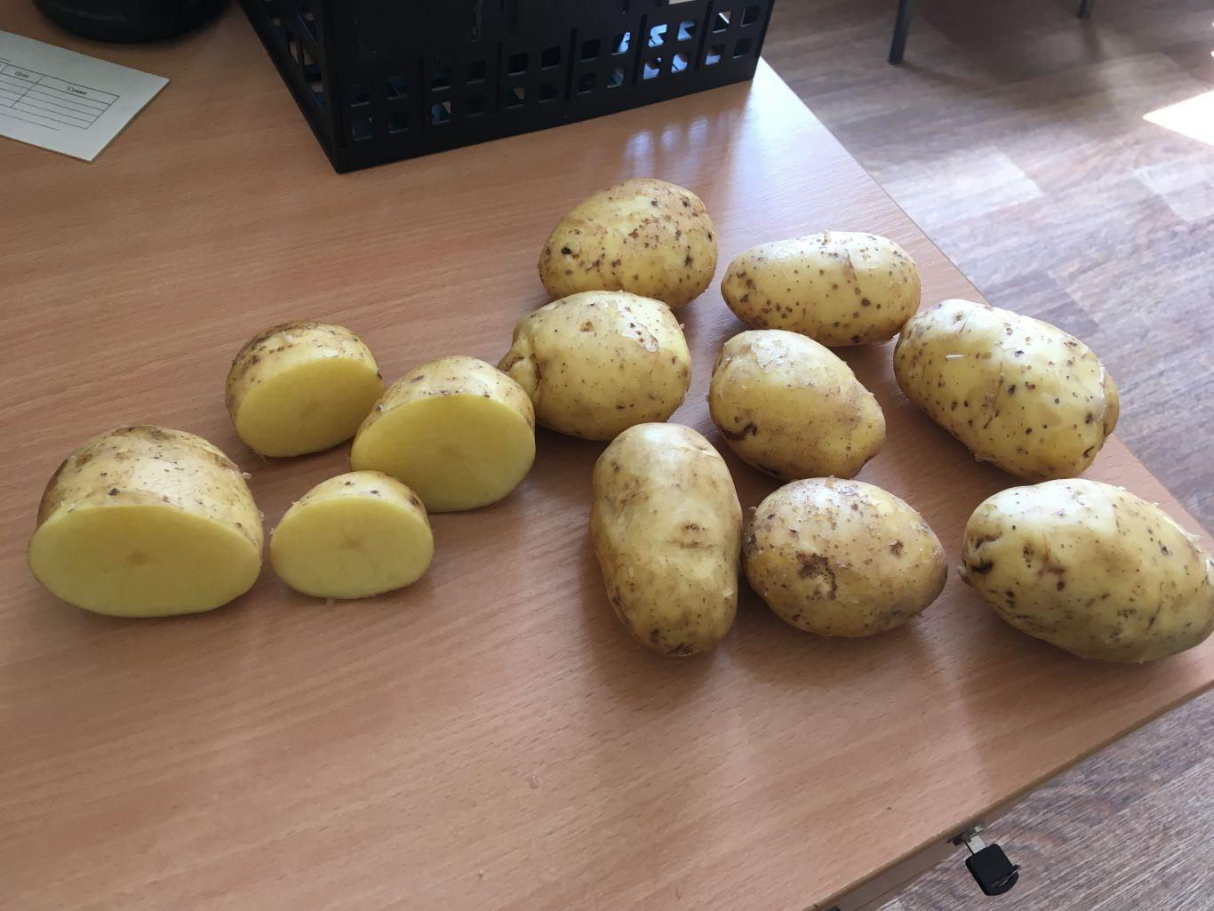 Картофель бриз – описание сорта, фото, отзывы