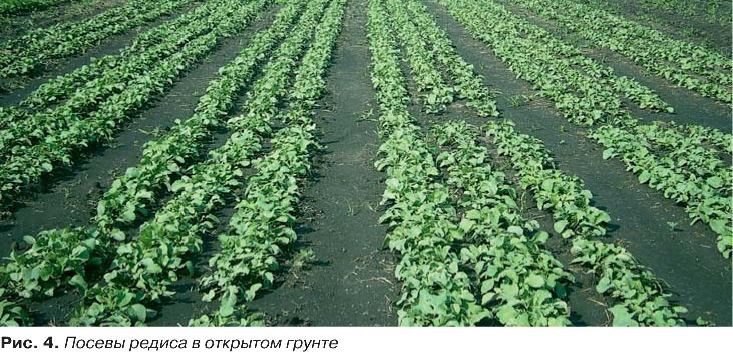 Выращивание картофеля: тонкости ухода и эффективные способы выращивания на приусадебном участке (105 фото)