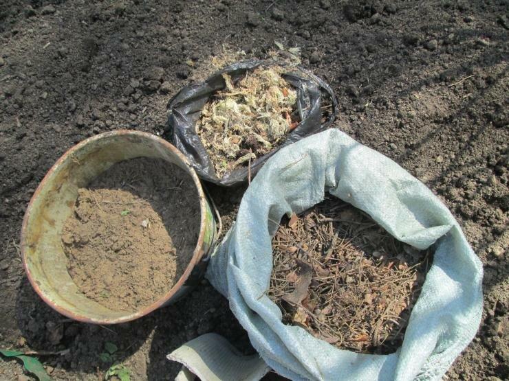 Как подкислить почву для голубики, какая должна быть почва