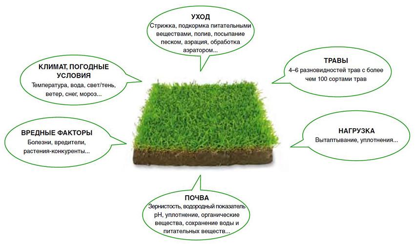 Газонная трава лилипут: особенности, характеристики, состав, плюсы и минусы, посев и уход