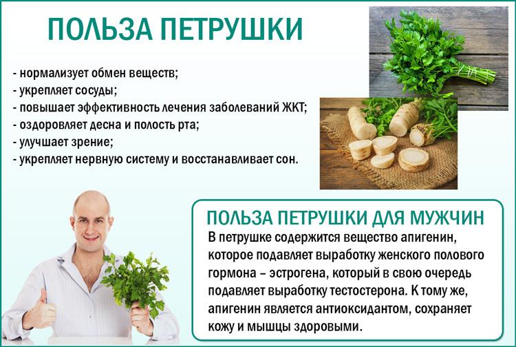 Польза петрушки для мужчин: правила употребления и рецепты народной медицины