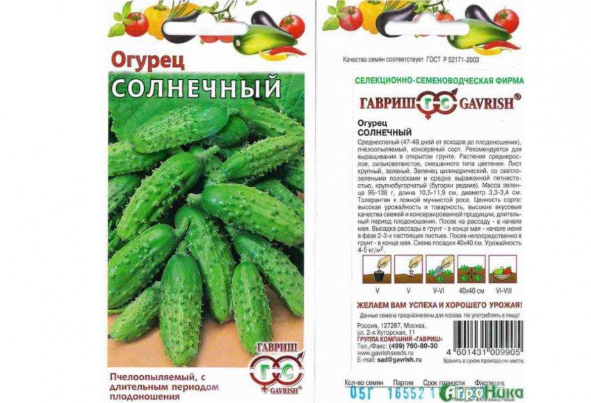 Лучшие сорта огурцов для открытого грунта для Подмосковья и выращивание