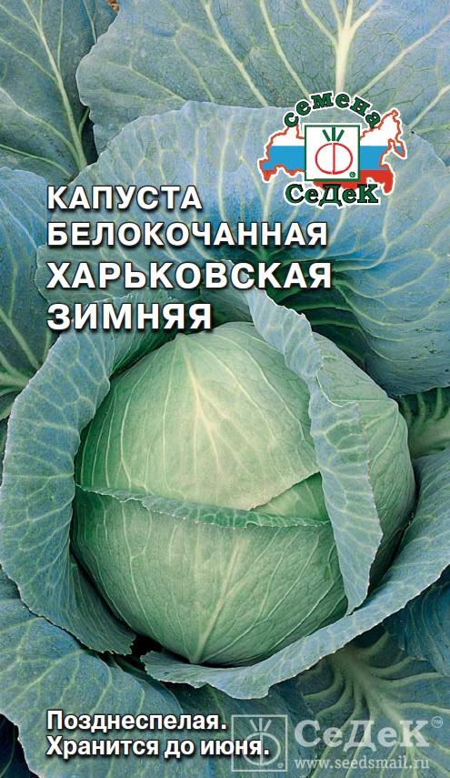 Капуста харьковская: описание и урожайность сорта, отзывы, фото