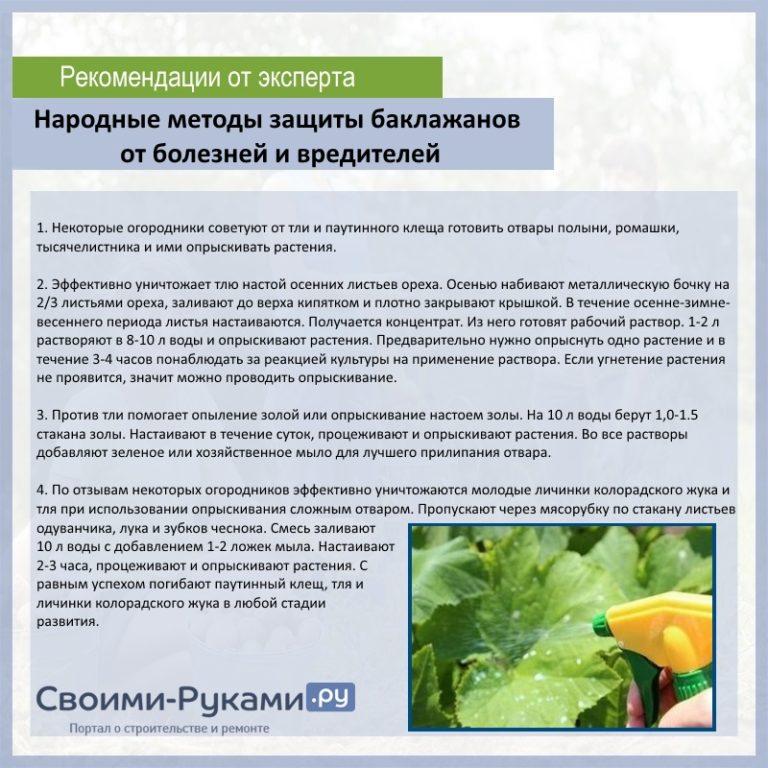 Чем обработать капусту от вредителей народными средствами: опрыскивание для защиты