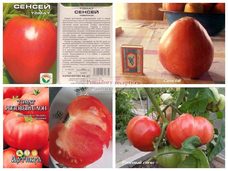 ᐉ томат сенсей описание сорта, фото, характеристика - orensad198.ru