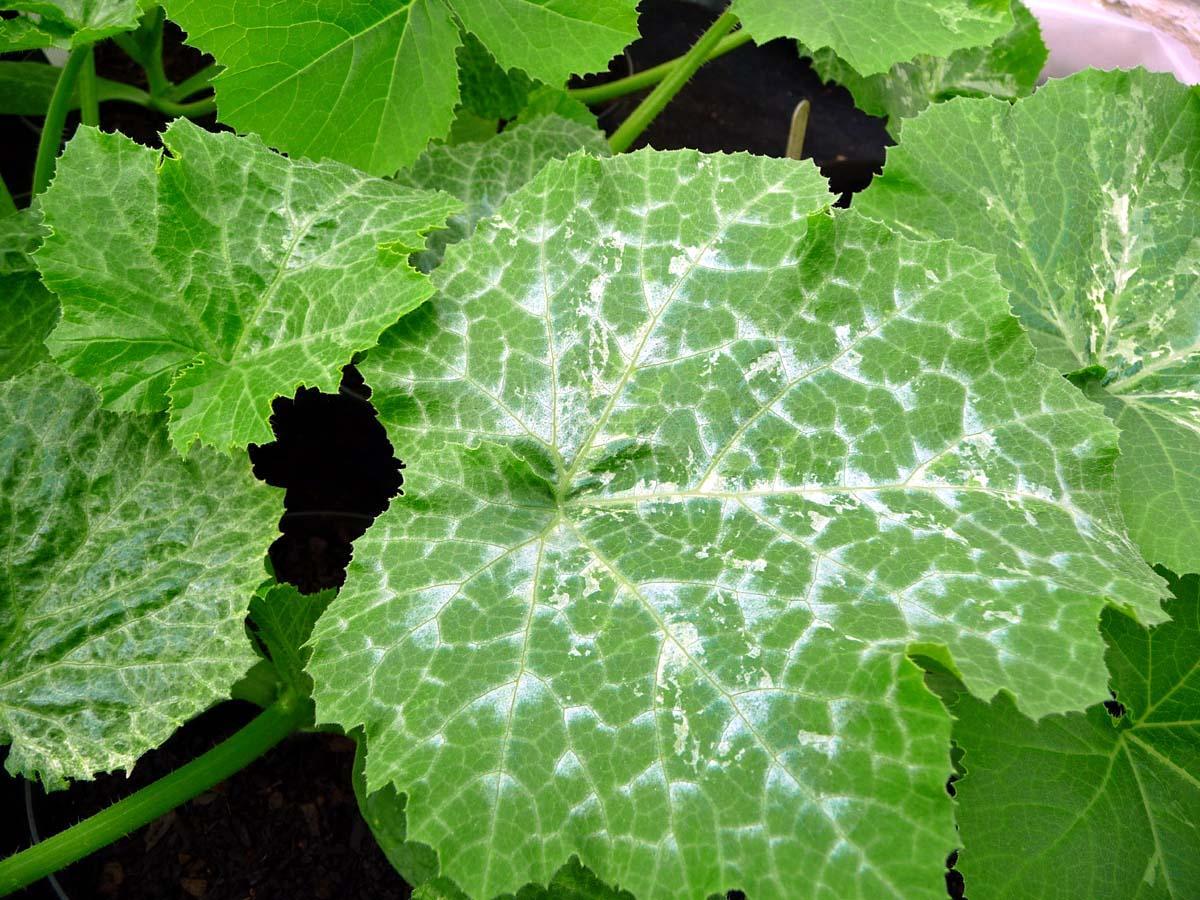 Себорейный дерматит и перхоть : причины, симптомы, диагностика, лечение   компетентно о здоровье на ilive