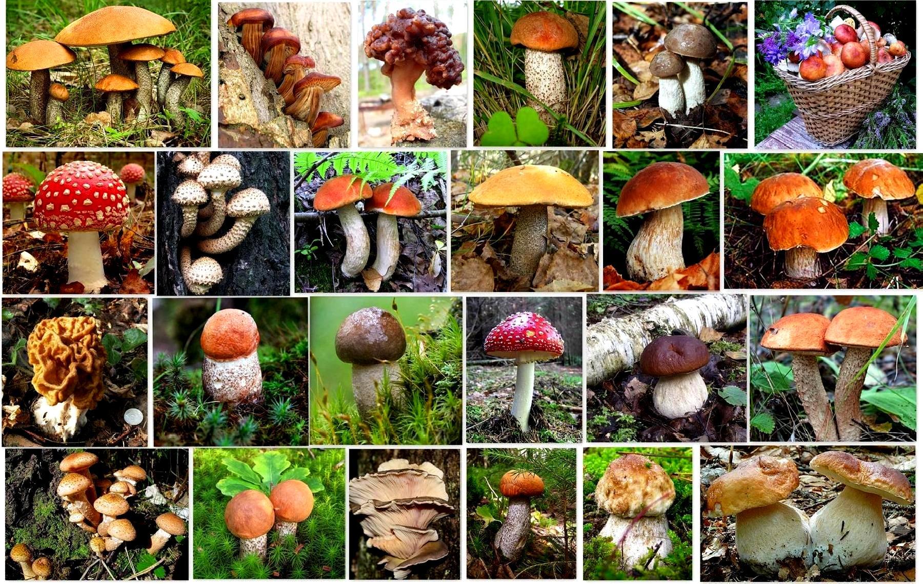 Календарь грибов: грибной календарь на июнь, июль, август, весну и осень