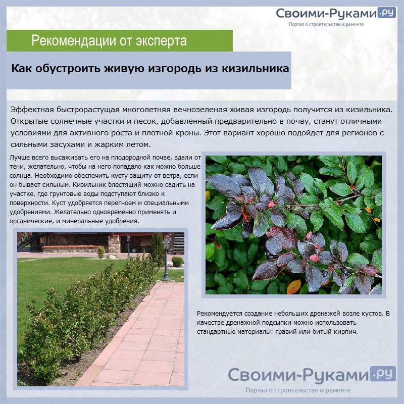 Живая изгородь на даче: современные решения, виды, фото