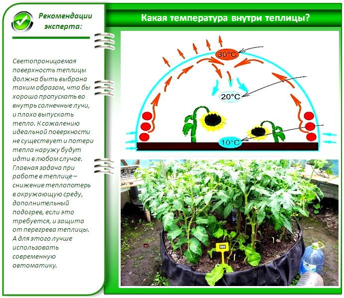 Условия для выращивания рассады: какой должна быть температура на supersadovnik.ru