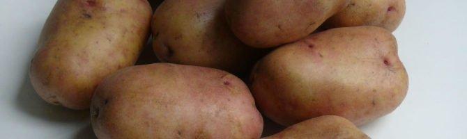 Картофель иван да марья — описание сорта с фото, характеристики, правила выращивания и ухода