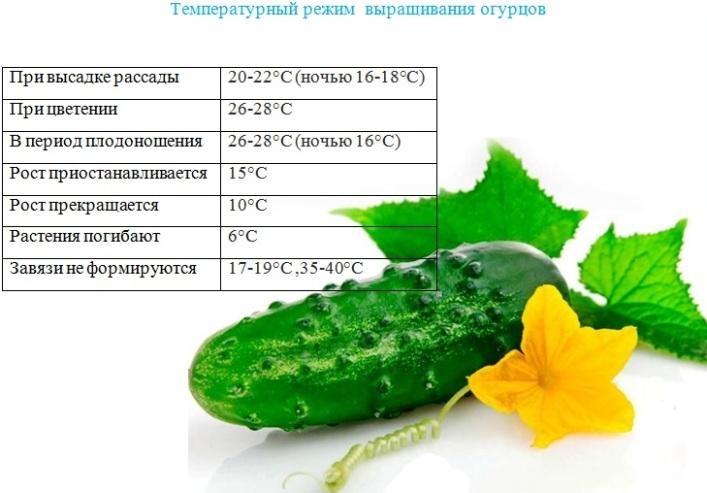 10 правил успешного выращивания рассады томатов в квартире. освещение, температура, полив. фото — ботаничка.ru