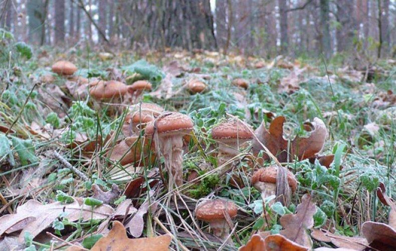 Какие грибы можно собирать в июле 2020 года в подмосковье: самые грибные места