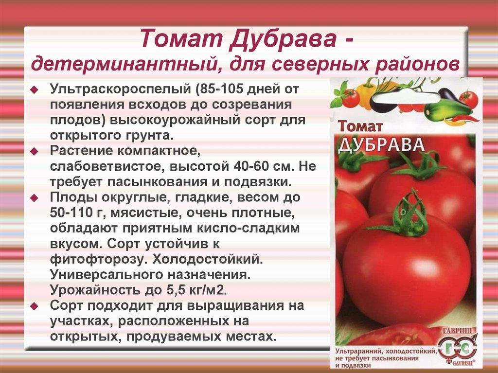 Описание раннеспелого томат эфемер и характеристики сорта - всё про сады