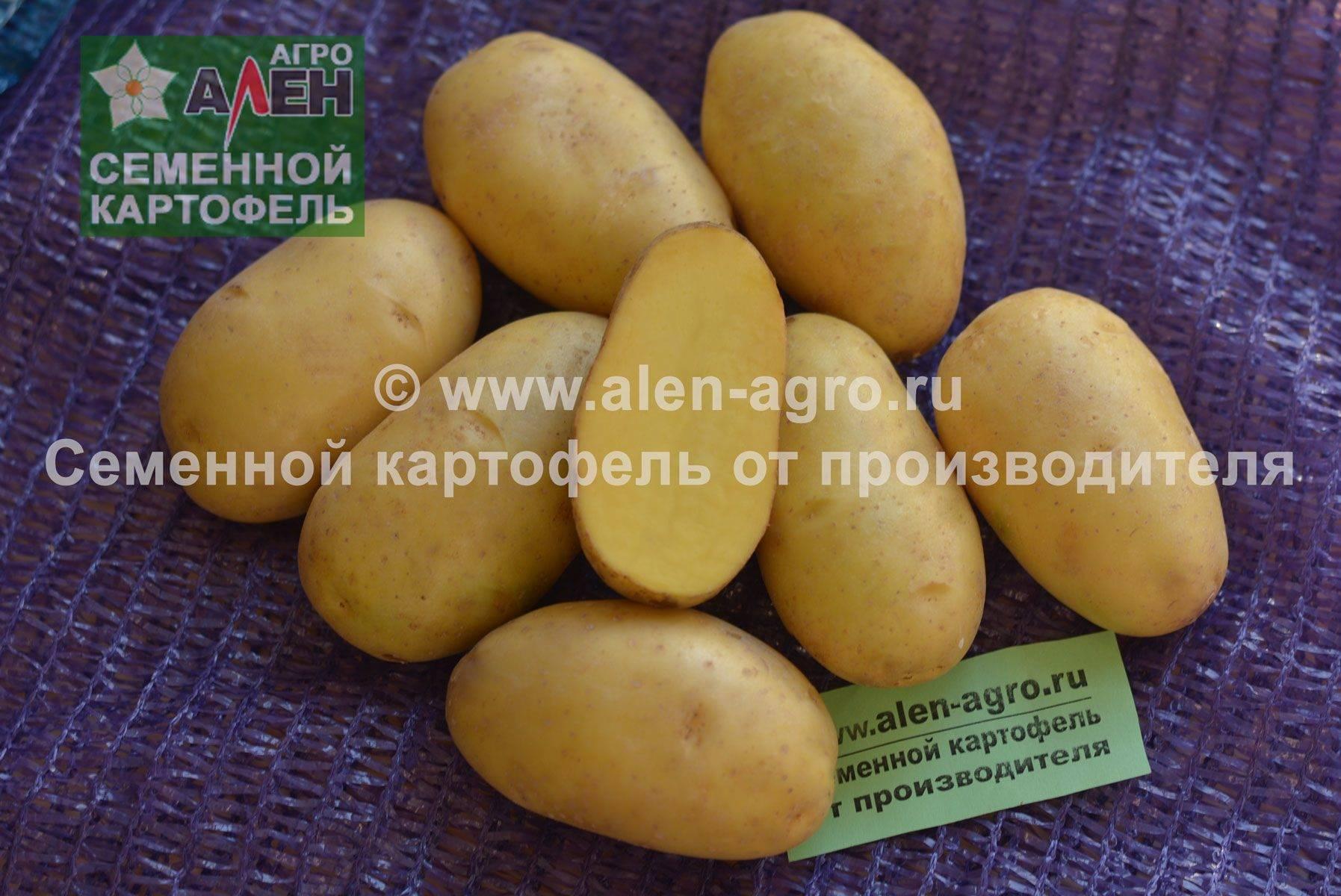Описание и характеристика сорта картофеля Колетте, правила посадки и ухода