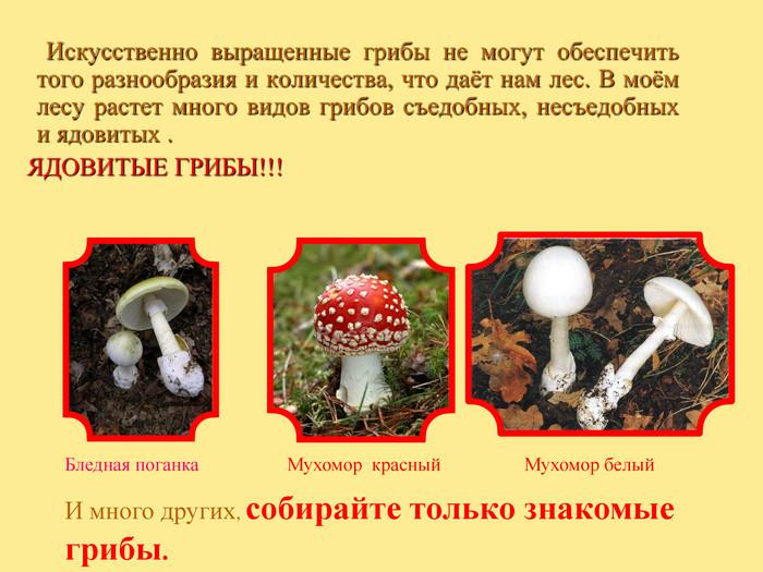 Как мариновать яичный (царский, цезарский) гриб: подготовка, способы и рецепты (+15 фото)