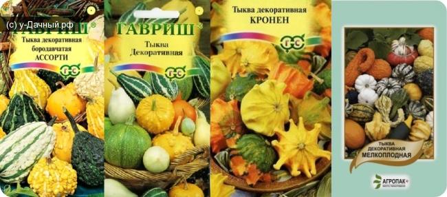 Декоративная тыква- сорта, посадка, выращивание и уход