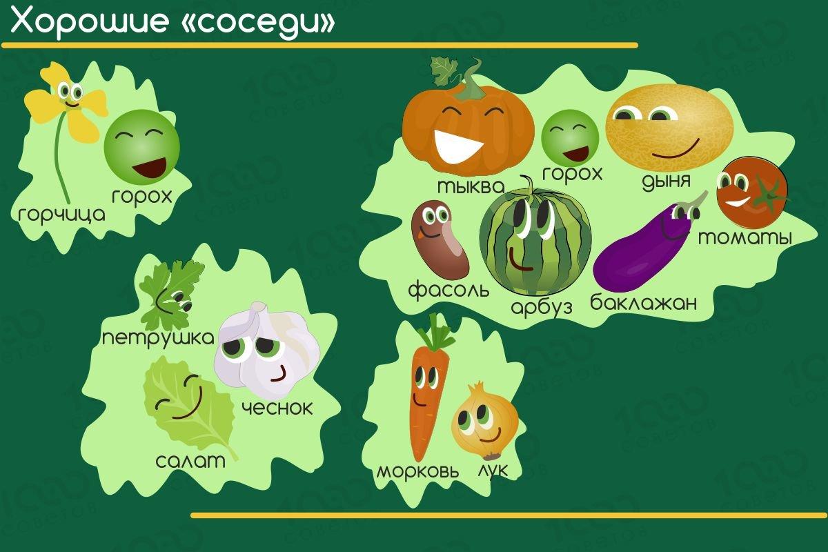 С чем можно рядом сажать горький перец: правила удачного соседства для острого овоща, выращивание в открытом грунте, теплице и на подоконнике