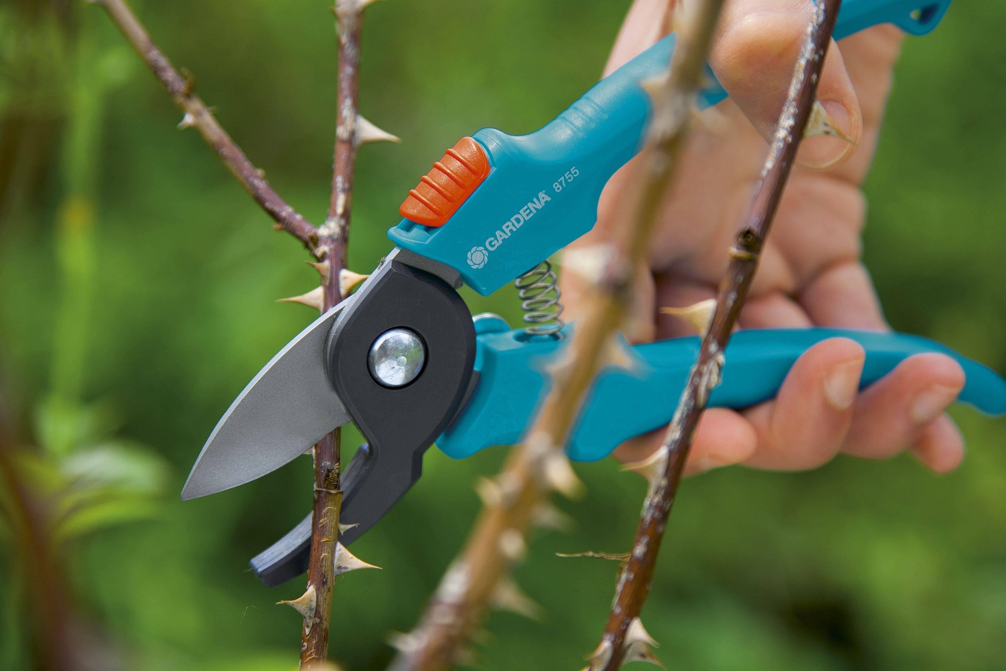 Сучкорезы для обрезки деревьев