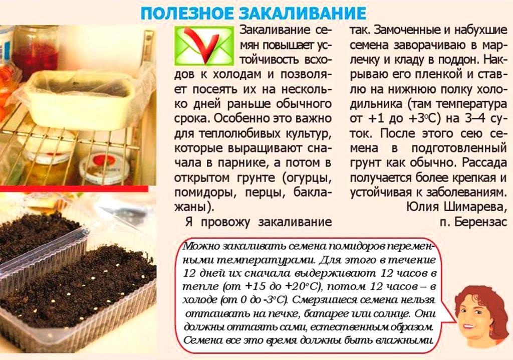 Подготовка семян к посеву: перца, томатов, этапы обработки, как правильно подготовить семечки к посадке русский фермер